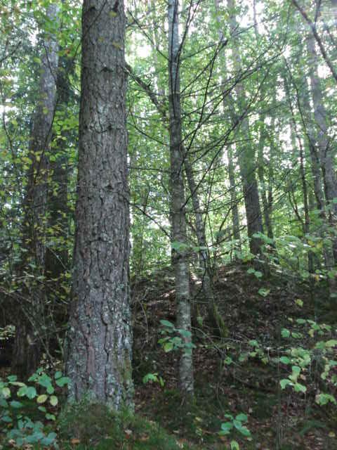 site for 234 ts 224 vendre 233 tang haras indicateur de march 233 forestier cours du bois carte de